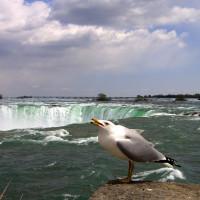 Photo of Niagara Falls, USA