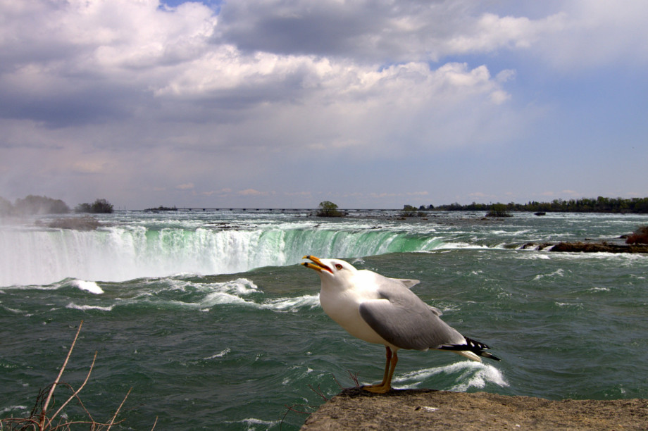 Photo of Niagara Falls, USA