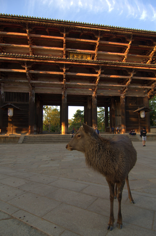 Photo of Nara, Japan